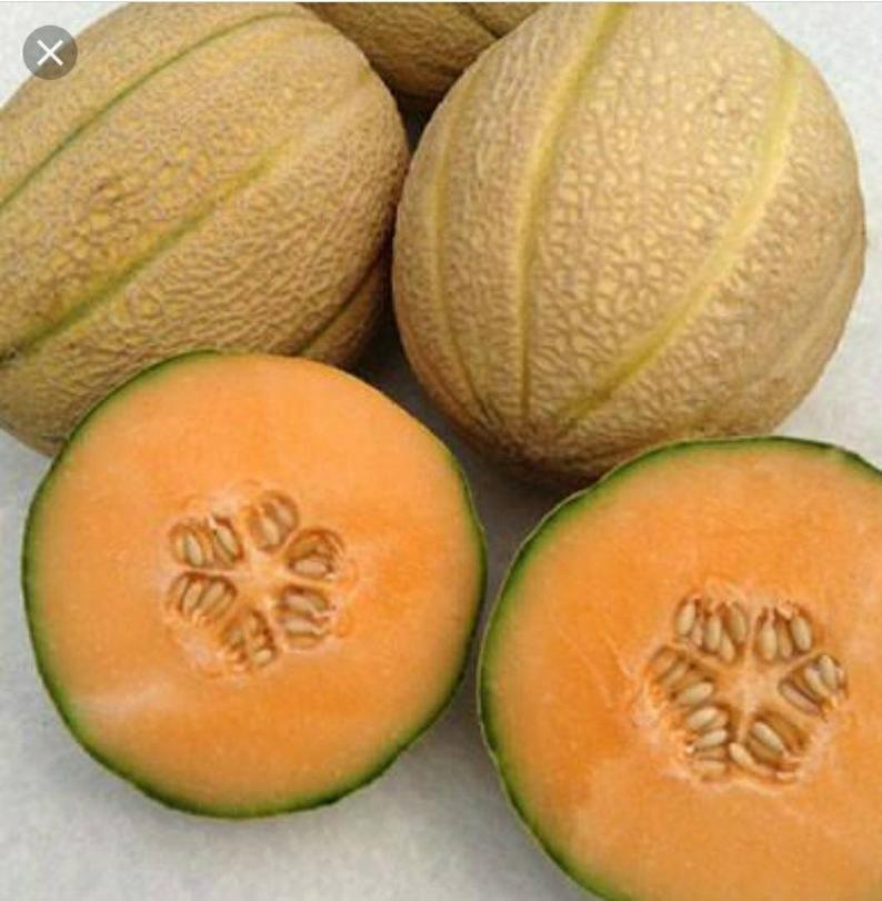 Stolen Cantaloupe.jpg