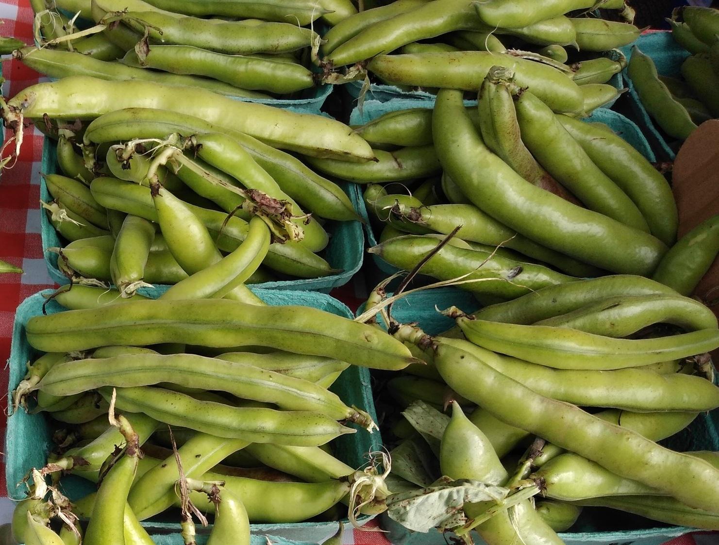 Fava+Beans+Pablo+Munoz+3.jpg