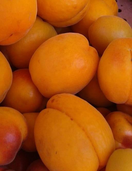 nectarines+%282%29.jpg