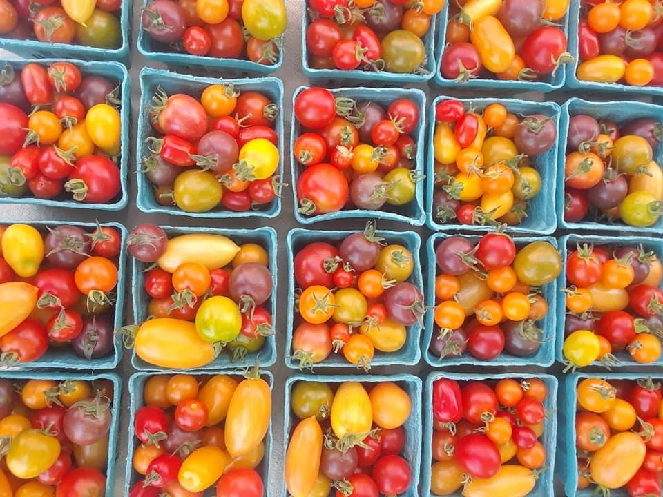 Tomatoes (19).jpg