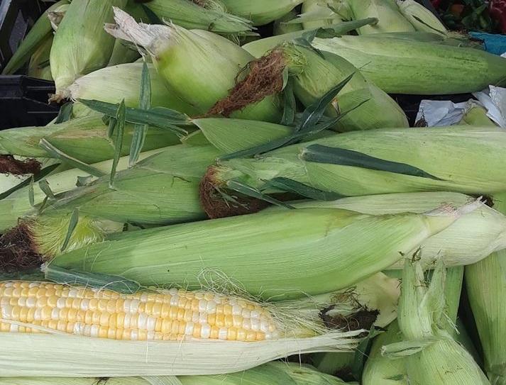 Corn+%2817%29.jpg