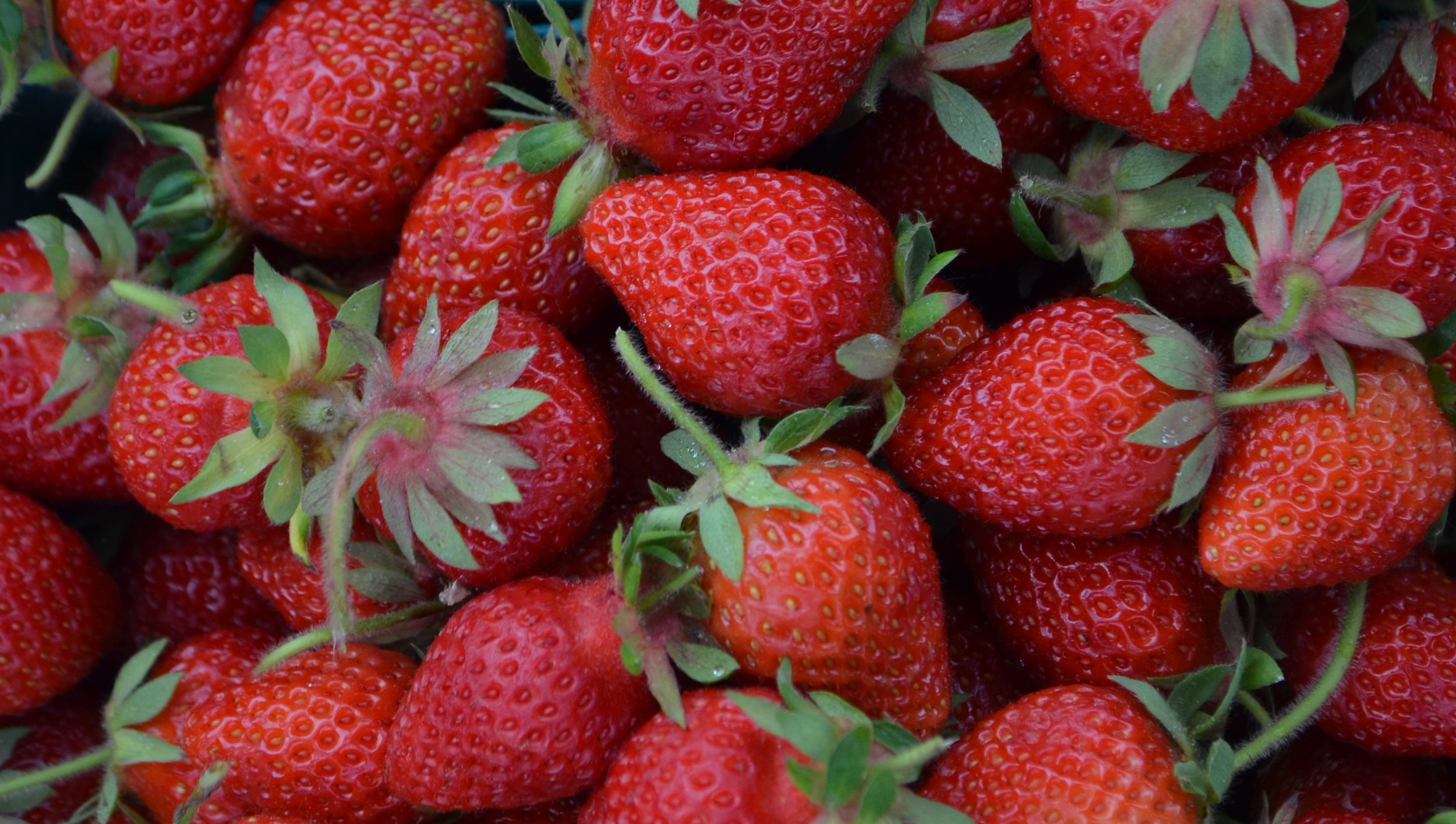 Pablo%2BMunoz_Strawberries%2B%25281%2529.jpg