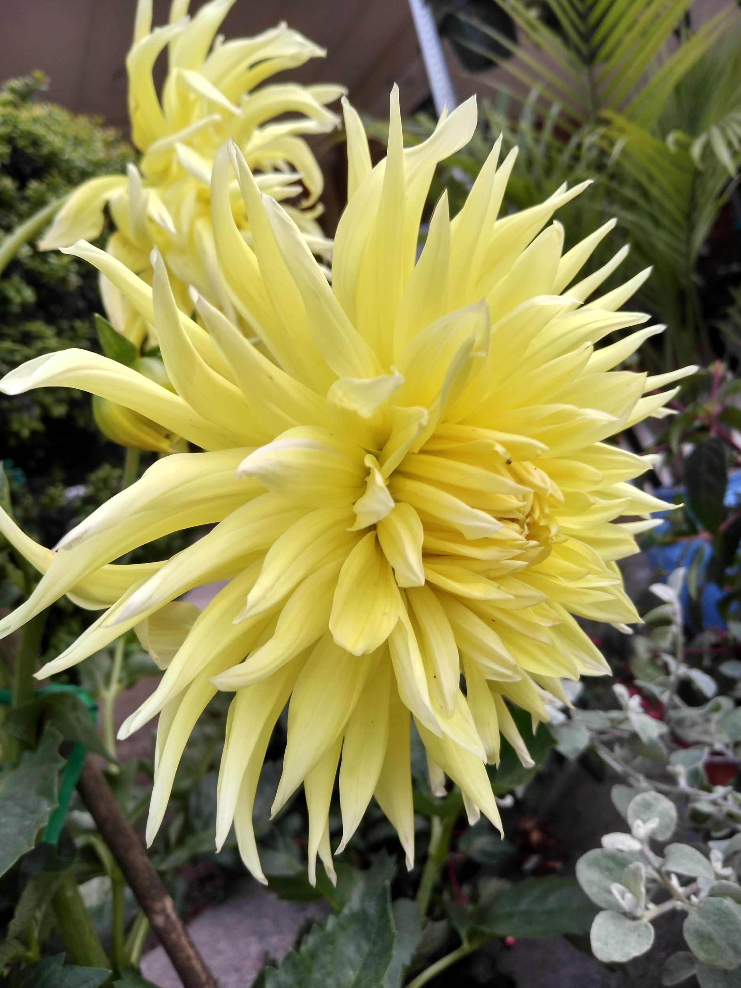 Flower Pruitt's 2.jpg