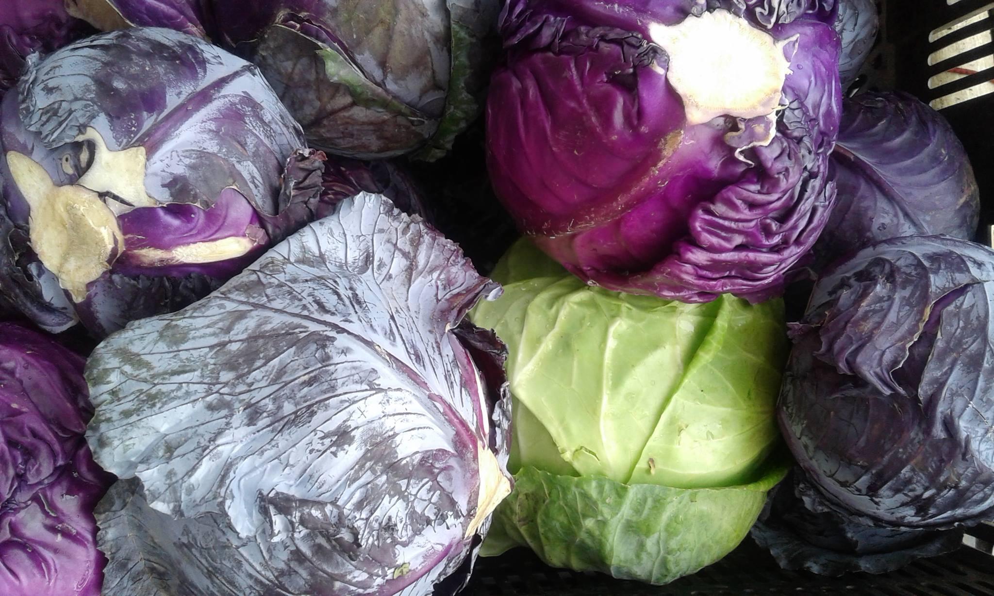 Cabbage (3).jpg