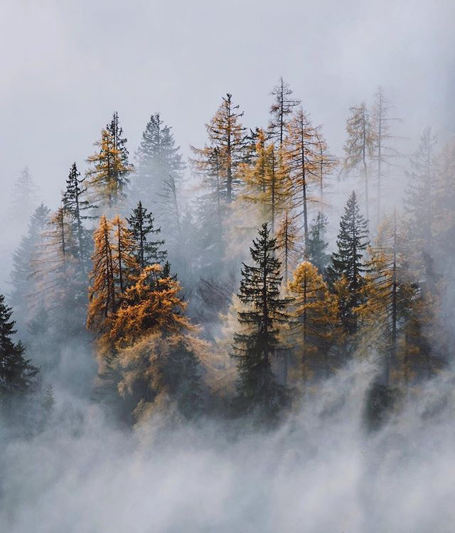 A fog rollin' through.  Stunning capture by @jpkay 📸 . . . #fog #explore #travel #farthermagazine #exploremore #stayandwander #optoutside #trees #foggy