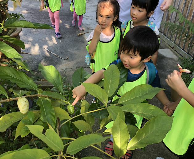 """Look! A noni fruit. """"This fruit has so many eyes. What could they be for?"""""""