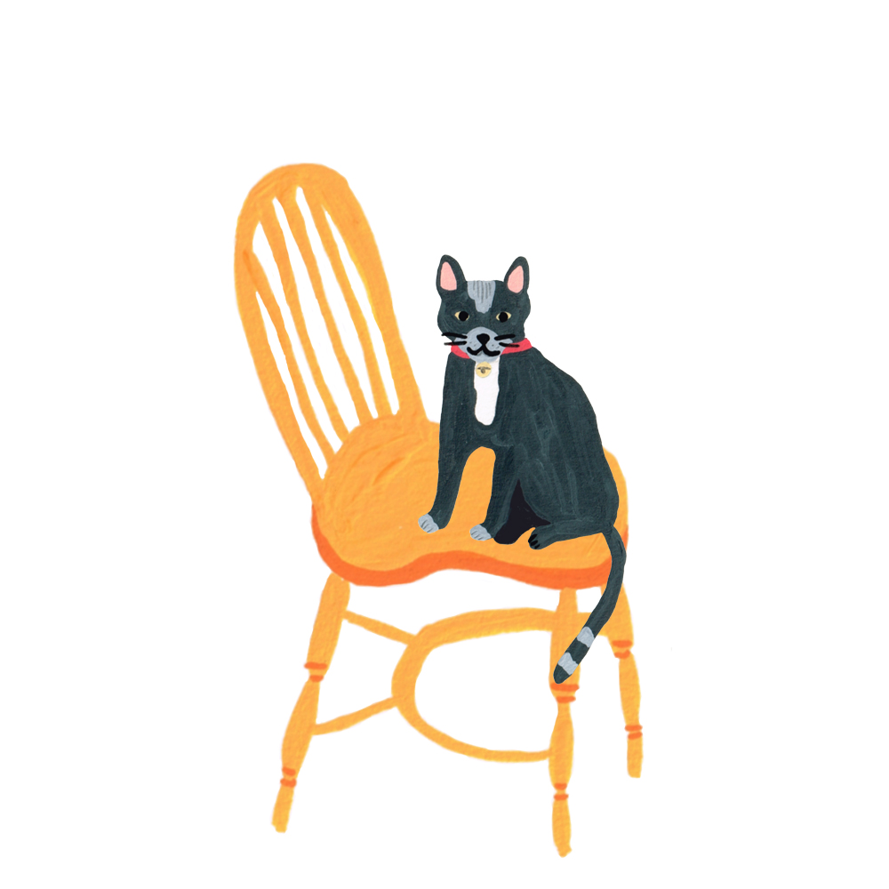 Cat in chair
