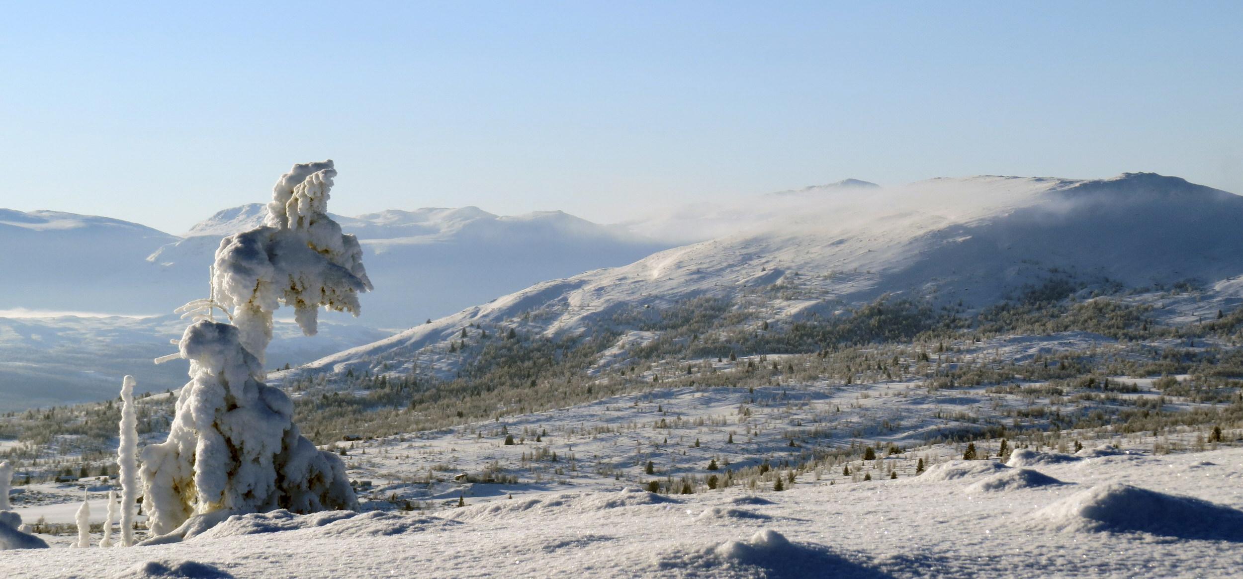 Vinterbilde tre med snø.jpg