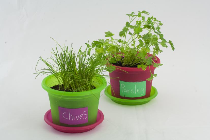 small garden pots.jpg