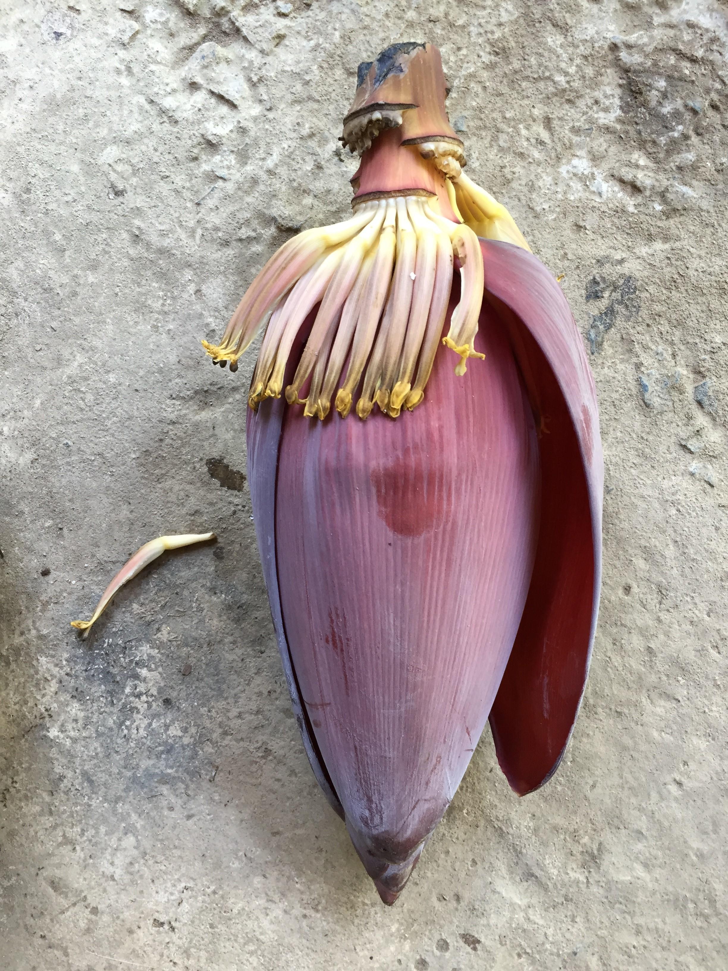 """""""Banana Flower Harvest"""""""