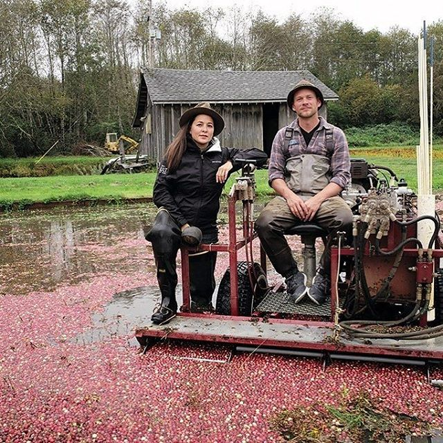 THANK YOU @modfarm for helping us tell our story! It's been a crazy 8 years, and education is a huge piece of our puzzle. There's a lot going on in this world of cranberries that we think people should know about and as we're trying to change our industry, to get support (and yeah, maybe sell more organic cranberries at their true cost!), help like this... really helps!  So THANK YOU AGAIN! 🌱🙏🌱🙏🏻🌱🙏🏼🌱🙏🏽🌱🙏🏾🌱🙏🏿                             @modfarm Repost :: Meet the Modern Farmers: Jessika Tantisook and Jared Oakes of @starvationalley. In 2009, when the couple began weaning their 10-acre cranberry bog off chemicals, people said it couldn't be done. Less than 1 percent of the cranberries grown in the United States are certified organic. Last fall, they harvested 80,000 pounds of fruit, still a third less than the bog had yielded using conventional methods, but with much higher margins. Their organic cranberries, in the form of cold-pressed juice and three tart sauces—sold online, at local farmers markets, and at 29 grocery stores in the Northwest—command the equivalent of $8 per pound. . Read the full profile via the link in our bio or in our Fall issue. 📷: @annamiadavidson