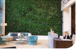Living Green Walls - Absorbing harmful Carbon Dioxide and particulate matter.Delivering fresh invigorating oxygen