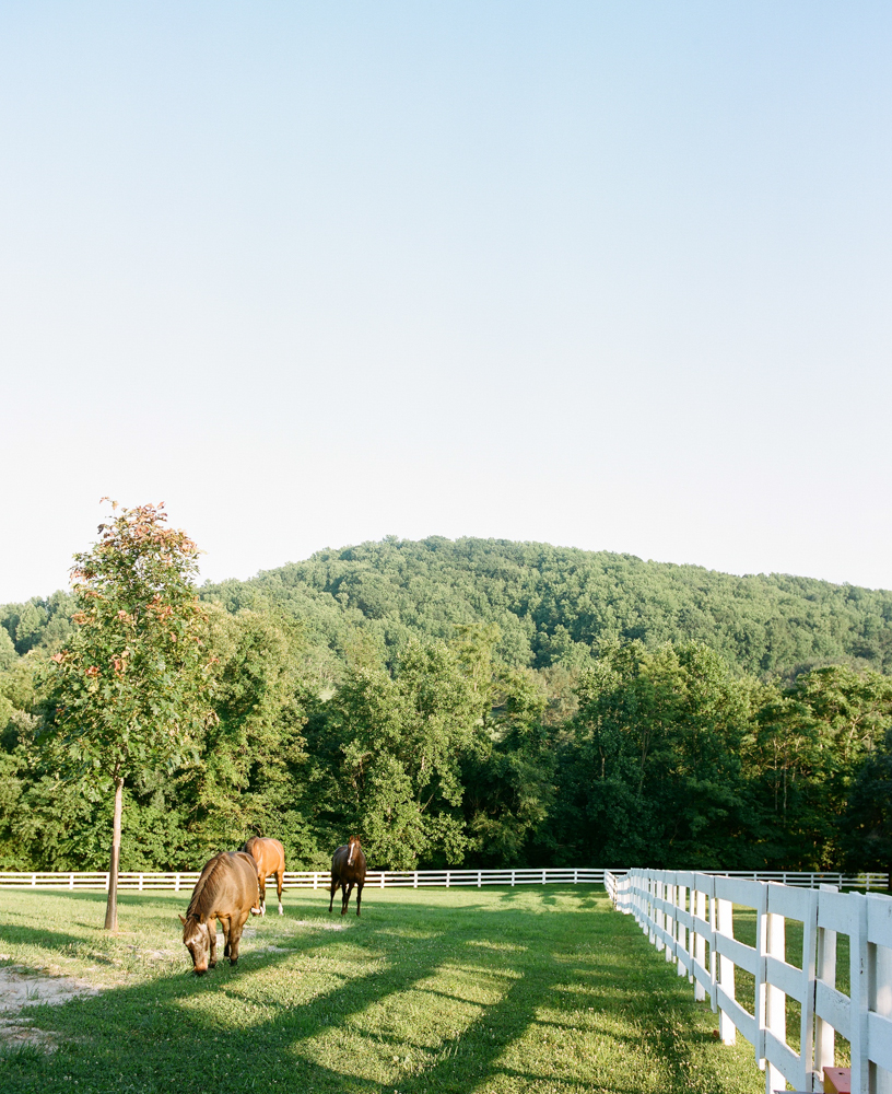 Radiant Southern Charm, Events by Reagan, Virginia Wedding, Destination Wedding Planner,  Farm Wedding, Horses