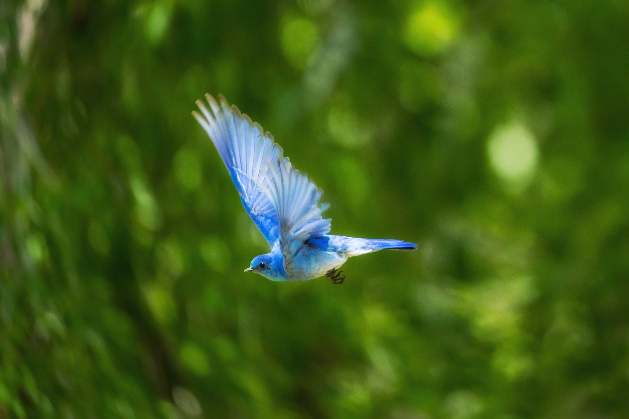 Bluebird - © 2014Genre: Jazz/Big BandTheme: Stories