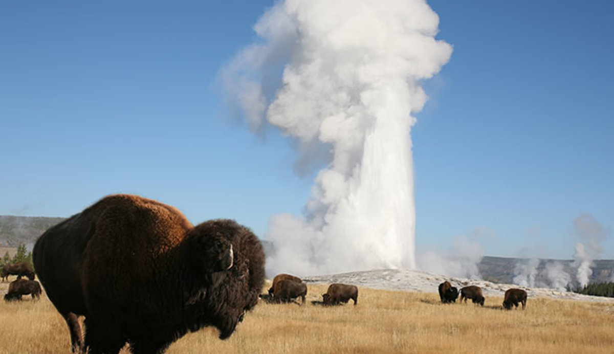 bison-old-faithful_ysj-pg21_680.jpg