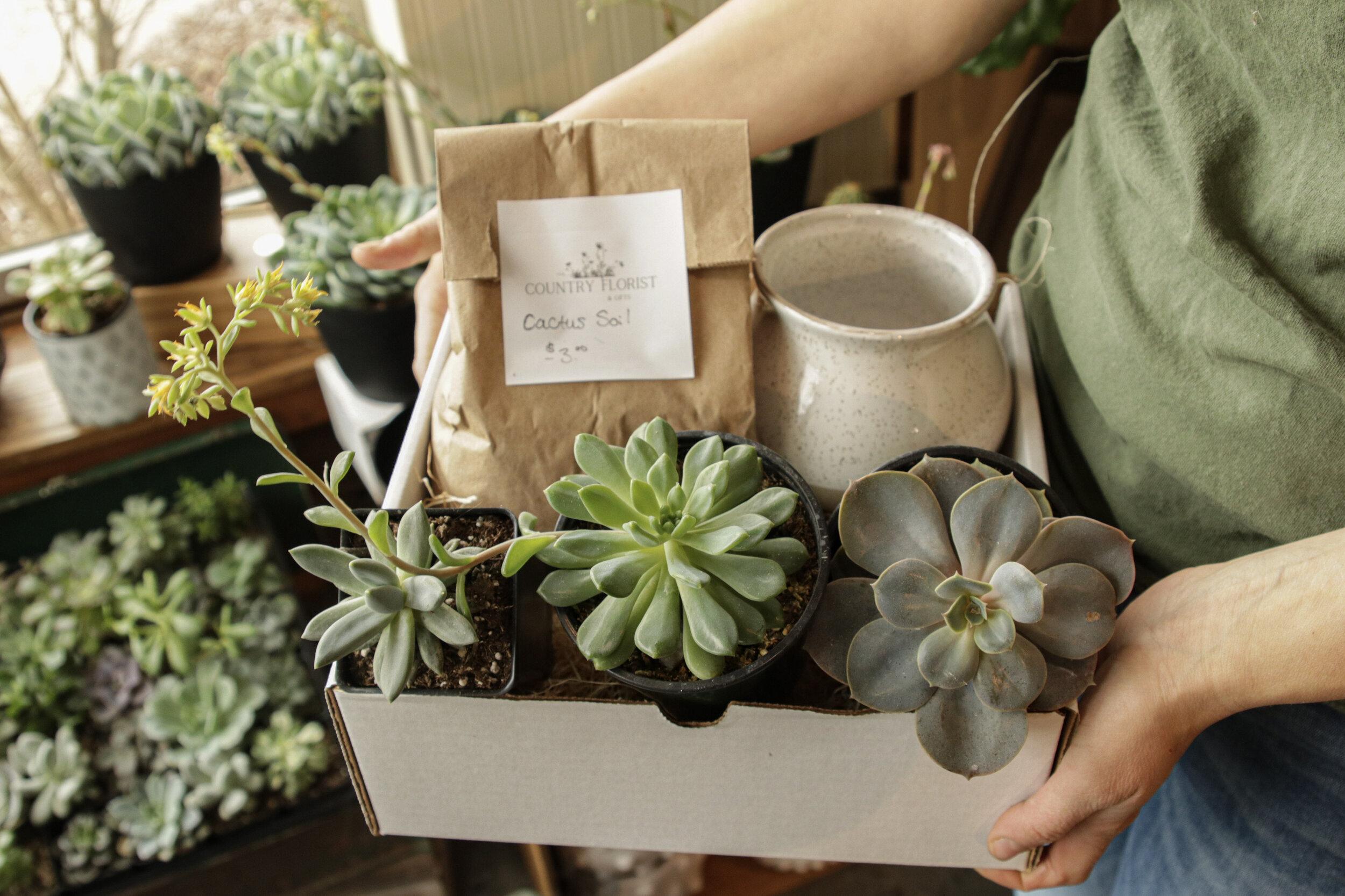 Diy Succulent Planter Kit Country Florist