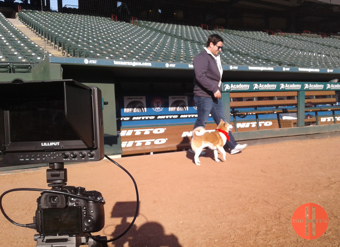 Hurst-Digital-dog-at-stadium.jpg