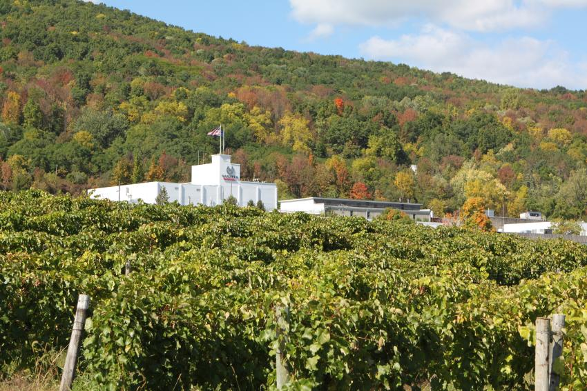 A fall day at Hazlitt's Red Cat Cellars. Photo: Visit Finger Lakes