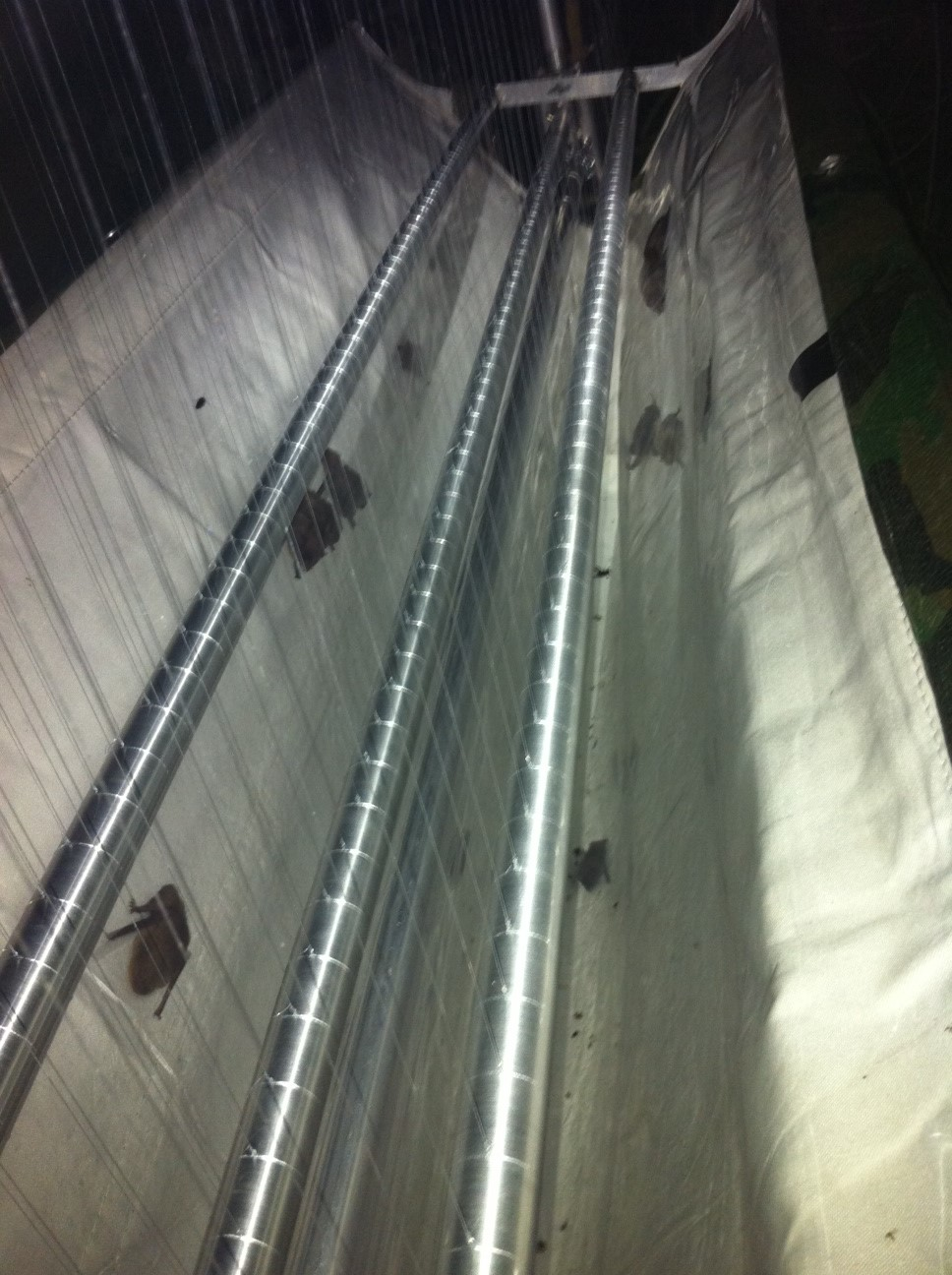 Bats caught in a harp trap under an advanced survey licence from Natural England
