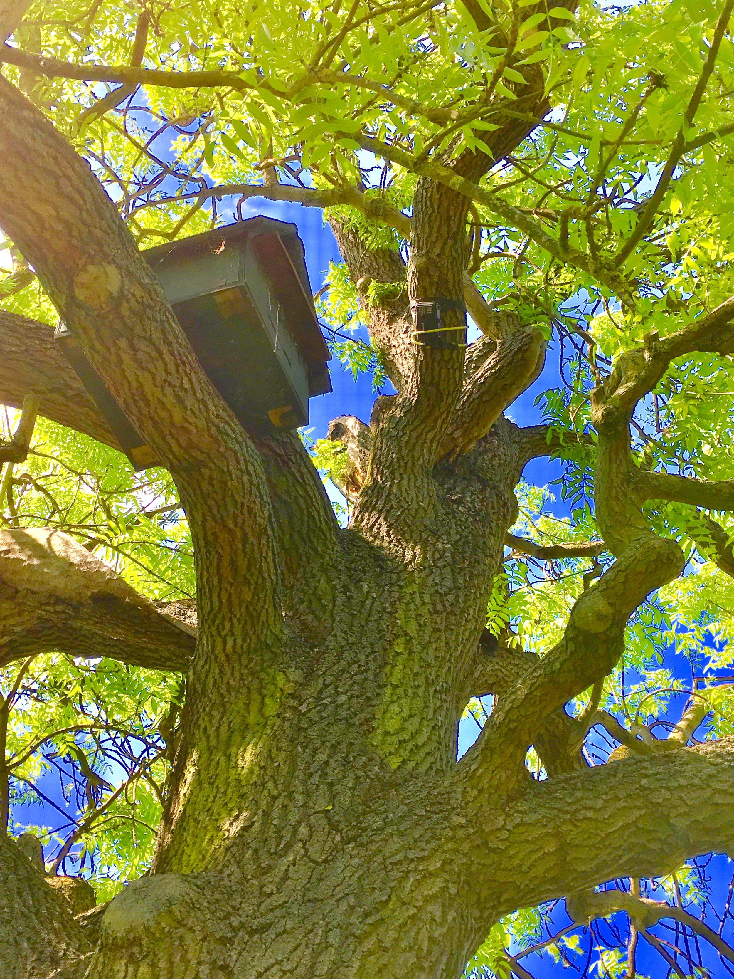 A barn owl nest box installed in a tree (photo: Matt Cook)