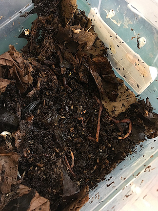 Worms creating compost