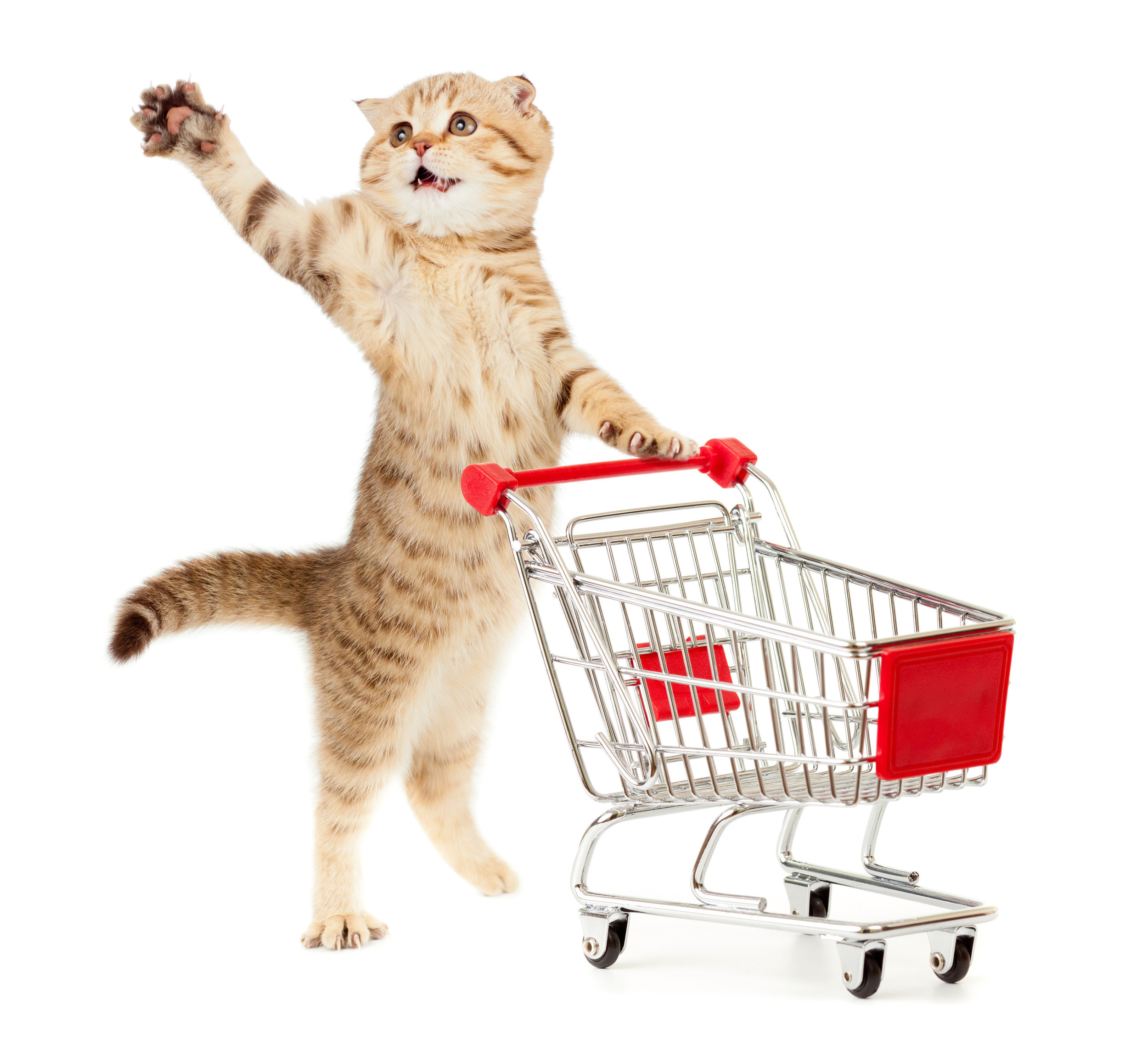 WE ARE IN CONSTANT NEED of certain pet supplies that we honestly can't afford. we have listed them on AMAZON -
