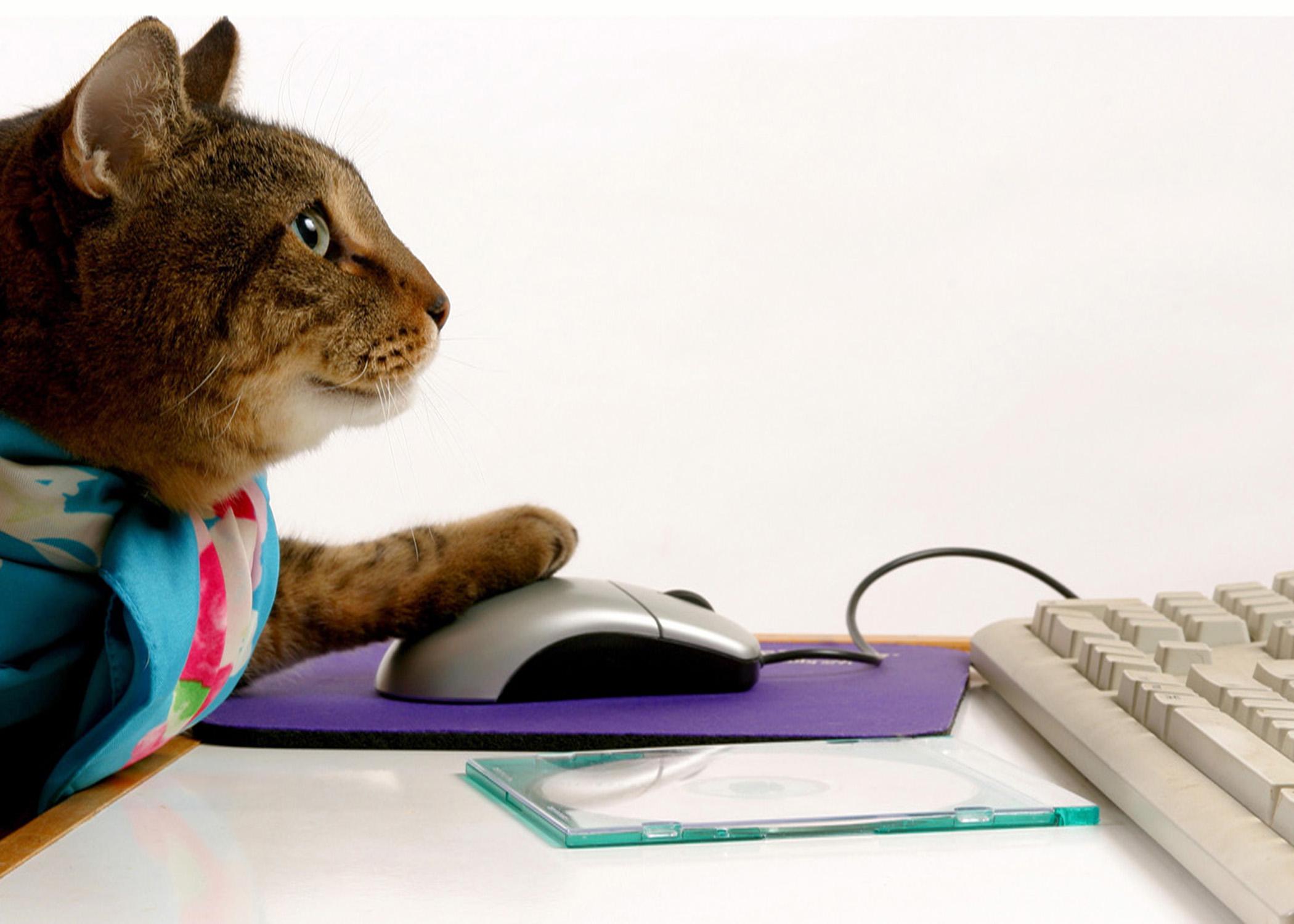 Cat at Computer.jpg