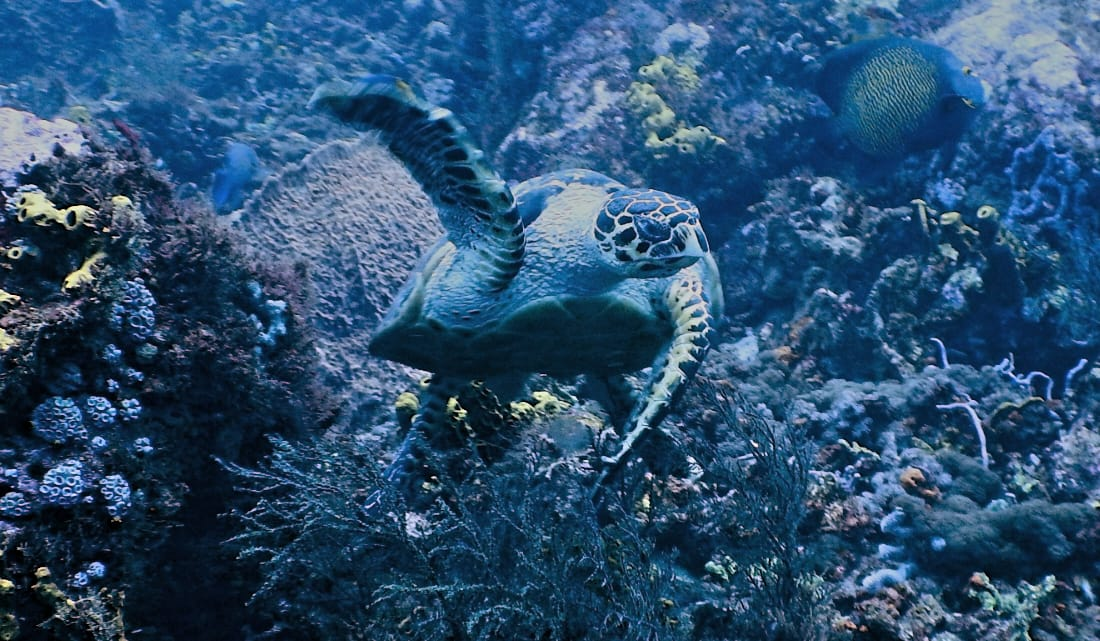 Explore our reefs !