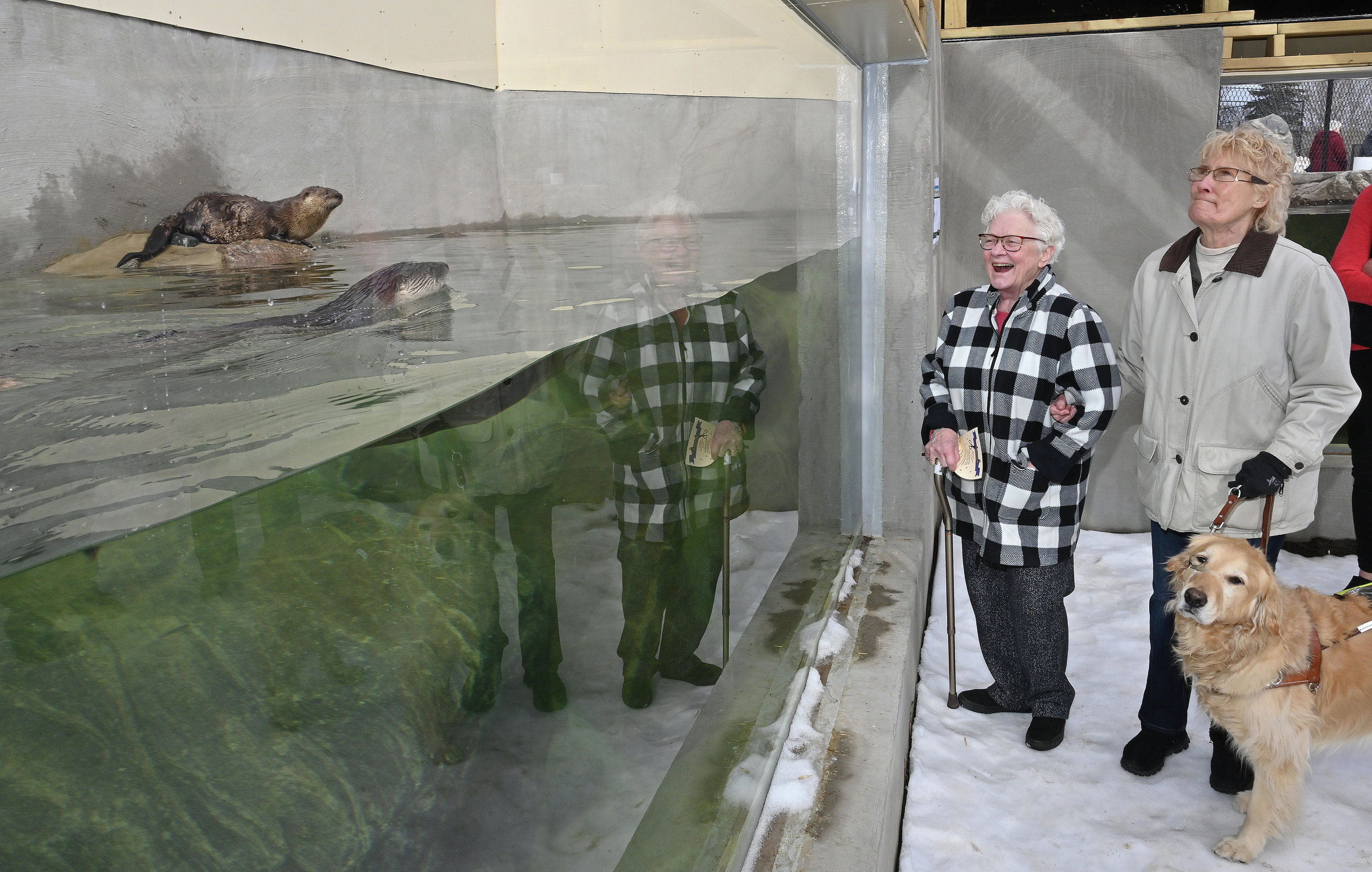 Mary Schneider (left) and Bunny Tabott with her dog Dixie watch North American river otters Ted and Dave swim Monday, April 15, in the new Pine Grove Zoo exhibit in Little Falls. The new aquarium, which opened Monday for the season, features an acrylic tank and tunnel where the otters can be viewed safely. Steve Kohls / Brainerd Dispatch Video