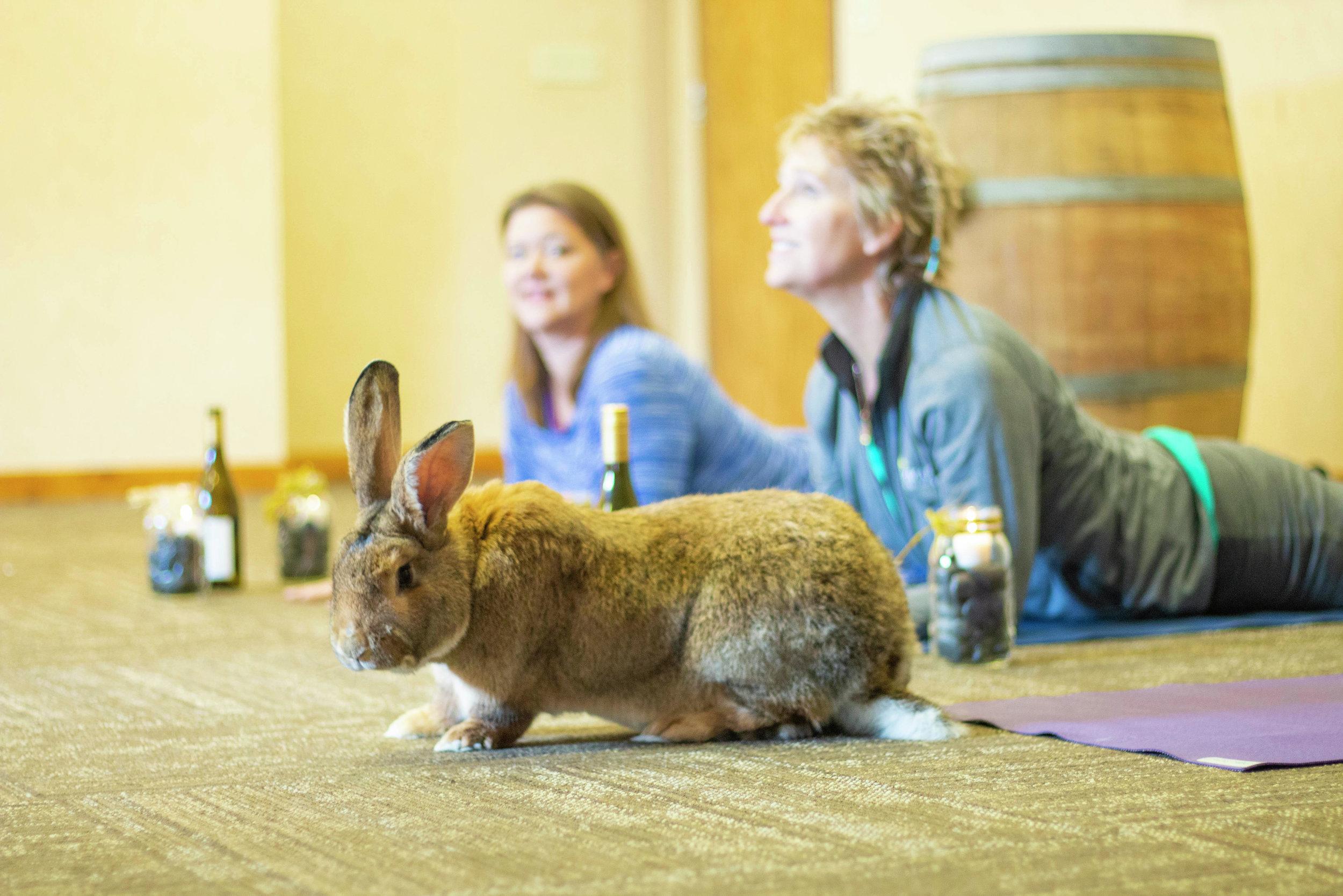 Lara Parkin of Karmady Yoga and Jill Mattson of Uplifted Wellness Studio enjoy a session of Hoppy Hour Yoga. Submitted photo