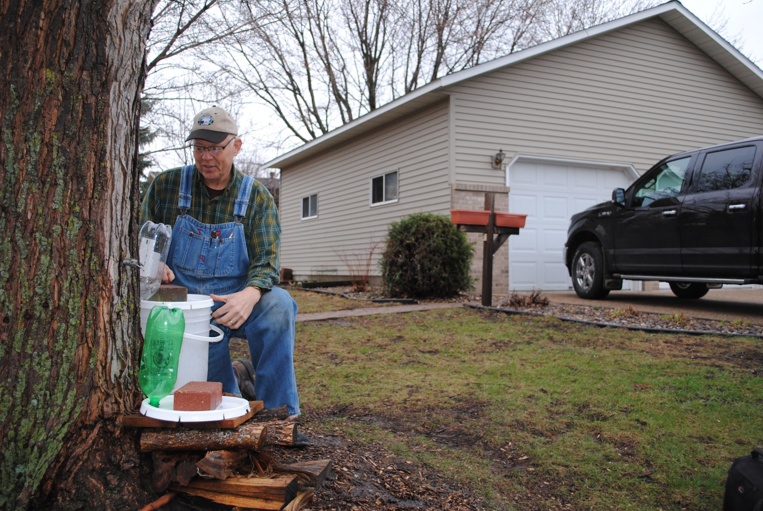 Leslie Bergquist is among a growing number of Minnesotans who have discovered the hobby of producing maple syrup can be enjoyed in an urban setting. He's shown checking a tree tapped at his home in a residential area on the east side of Granite Falls. Tom Cherveny / Foum News Service