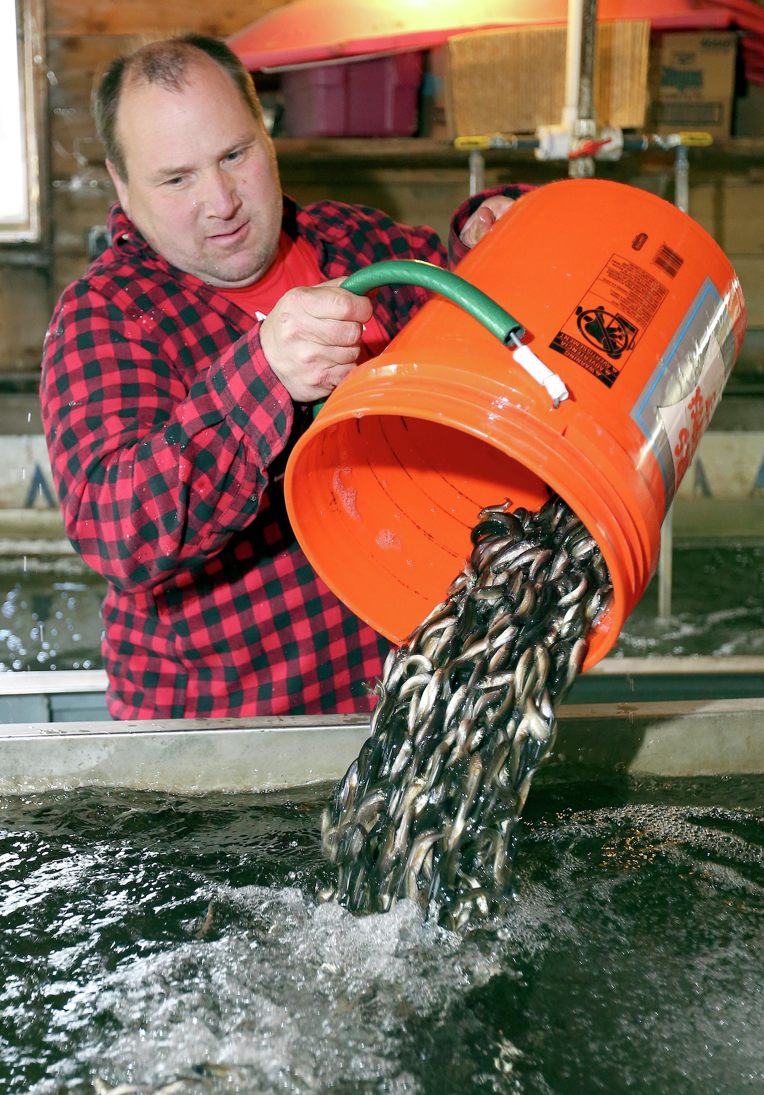 Despite many bait dealers saying minnows could be in short supply ahead of Saturday's Minnesota fishing opener, John Chalstrom of Chalstrom's bait near Duluth said he's confident he'll have enough minnows for anglers by Friday. Forum News Service file photo
