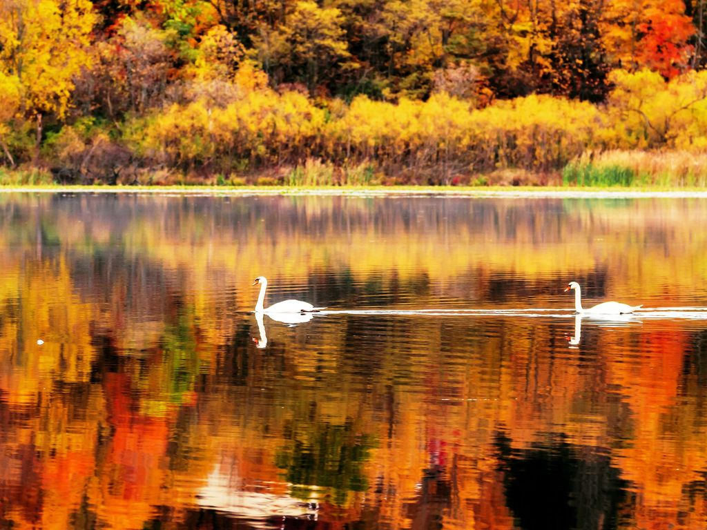 Fall foliage on quiet Stone Lake is gorgeous...very peaceful and serene.