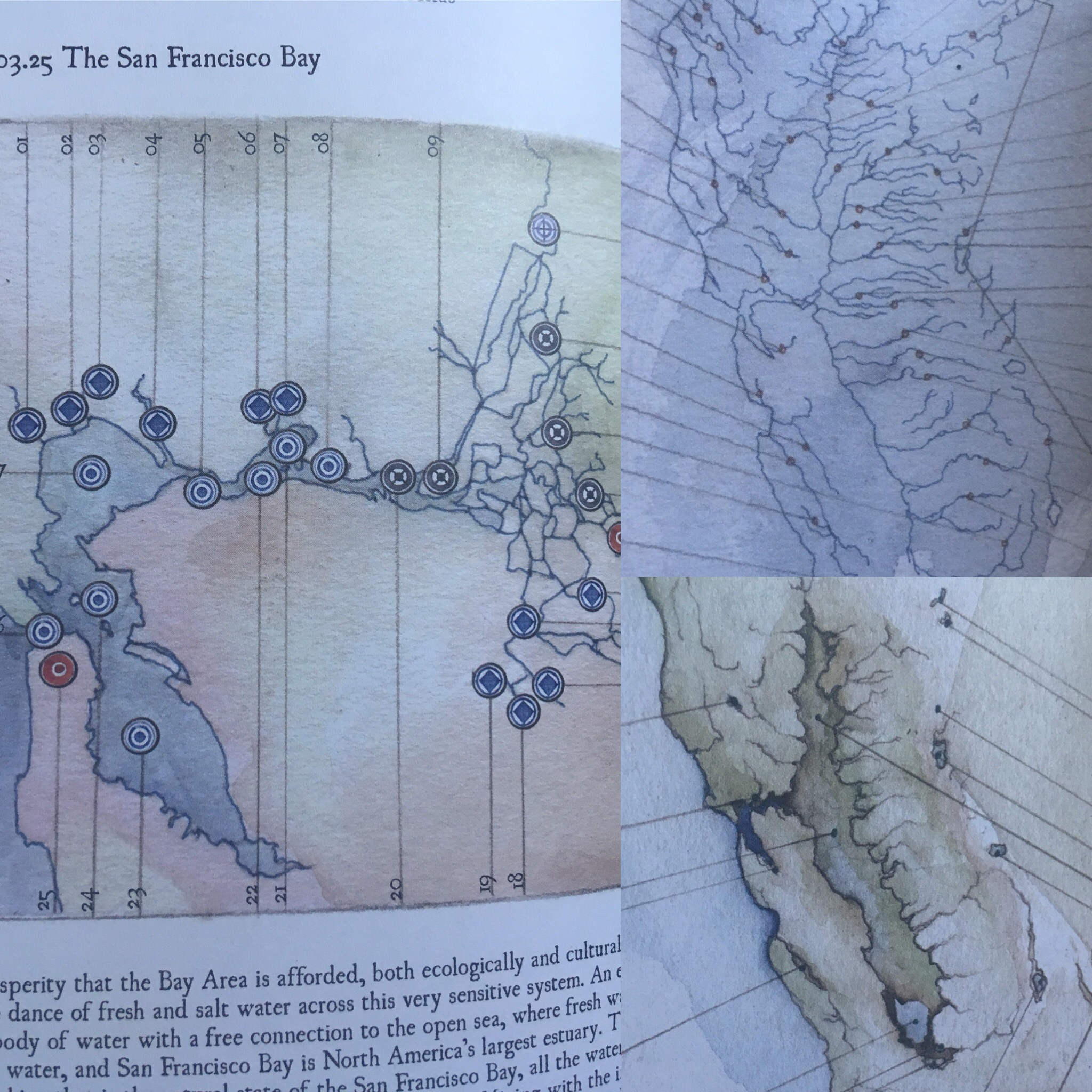 Gorgeous illustrations from The California Field Atlas by Obi Kaufmann