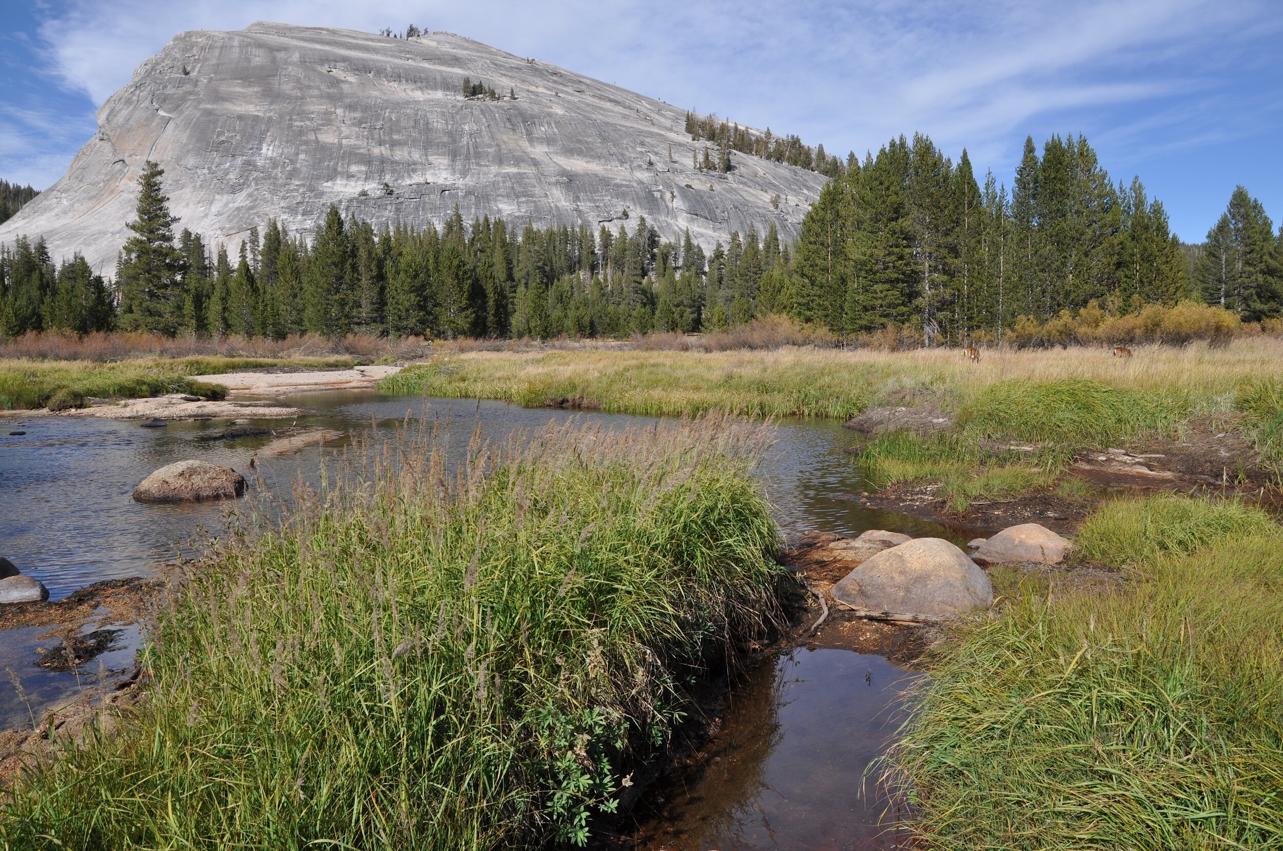 Tuolumne Meadows where the Dana Fork and the Lyell Fork combine to form the Tuolumne River