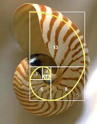 FibonacciSpiralShell.png