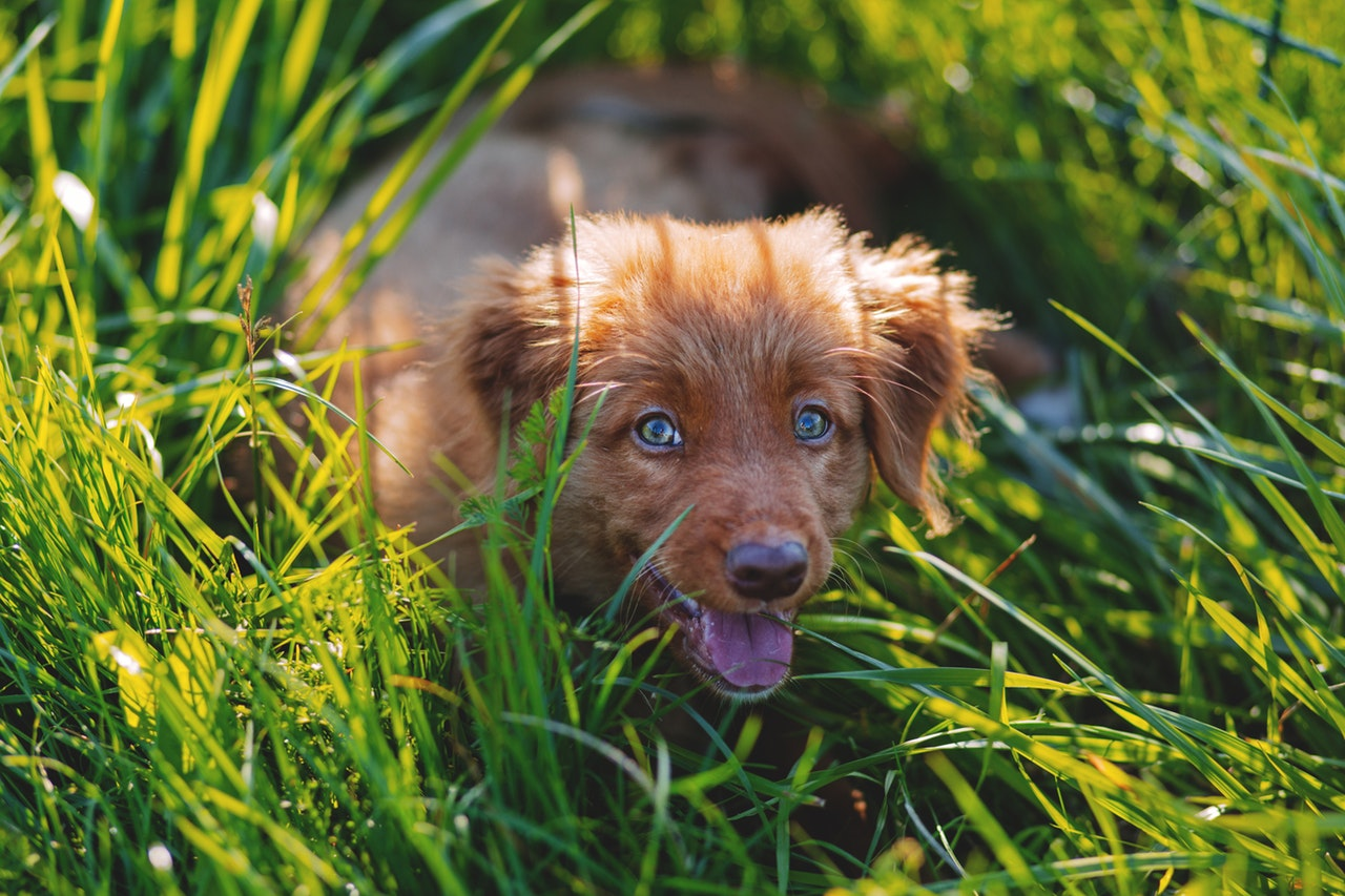 Your Brain Is Like A Puppy. Everything Grabs Its Attention, And It Wants To Sniff All Of It.
