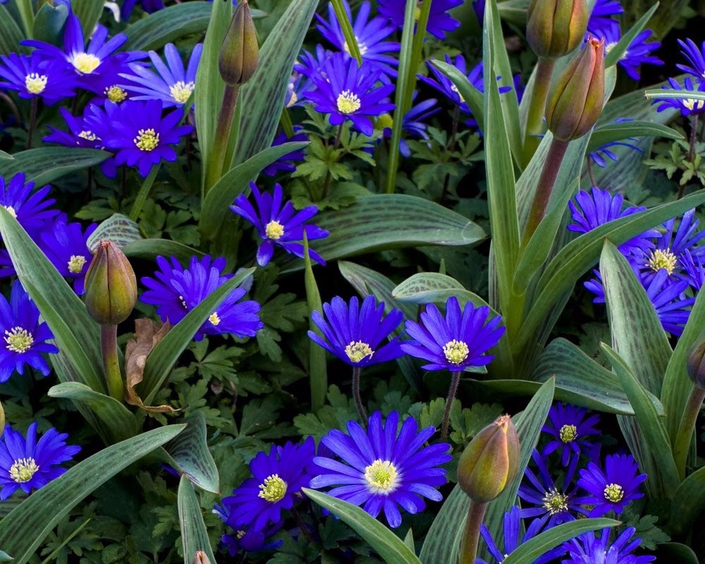 plant in spring - fall bulbs