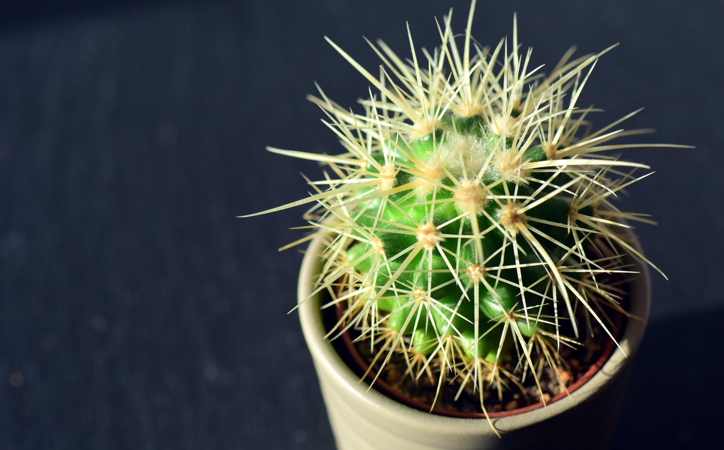 - Cactus