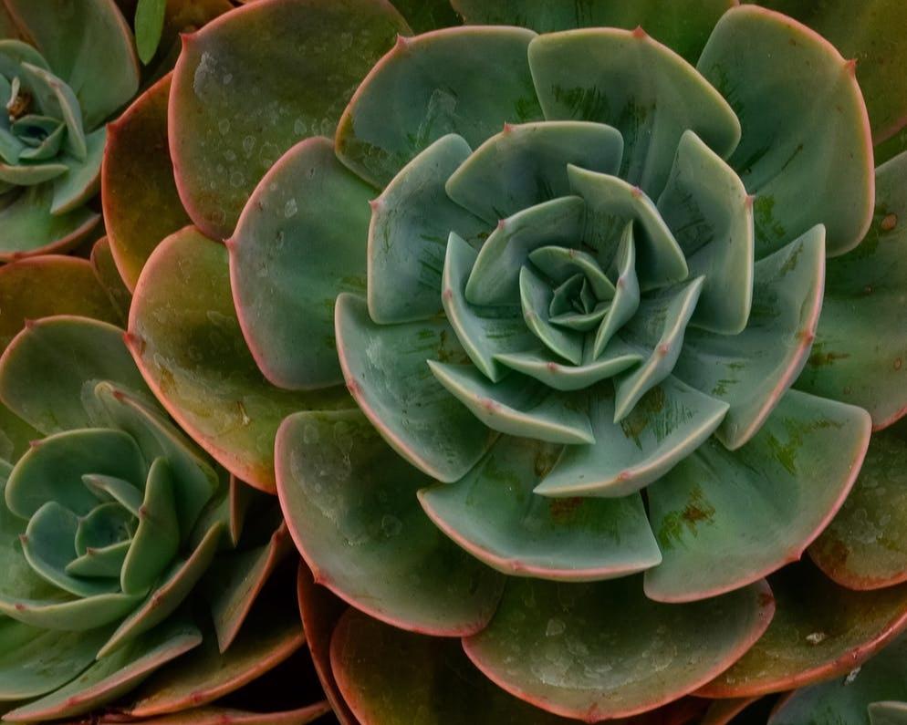 - succulents