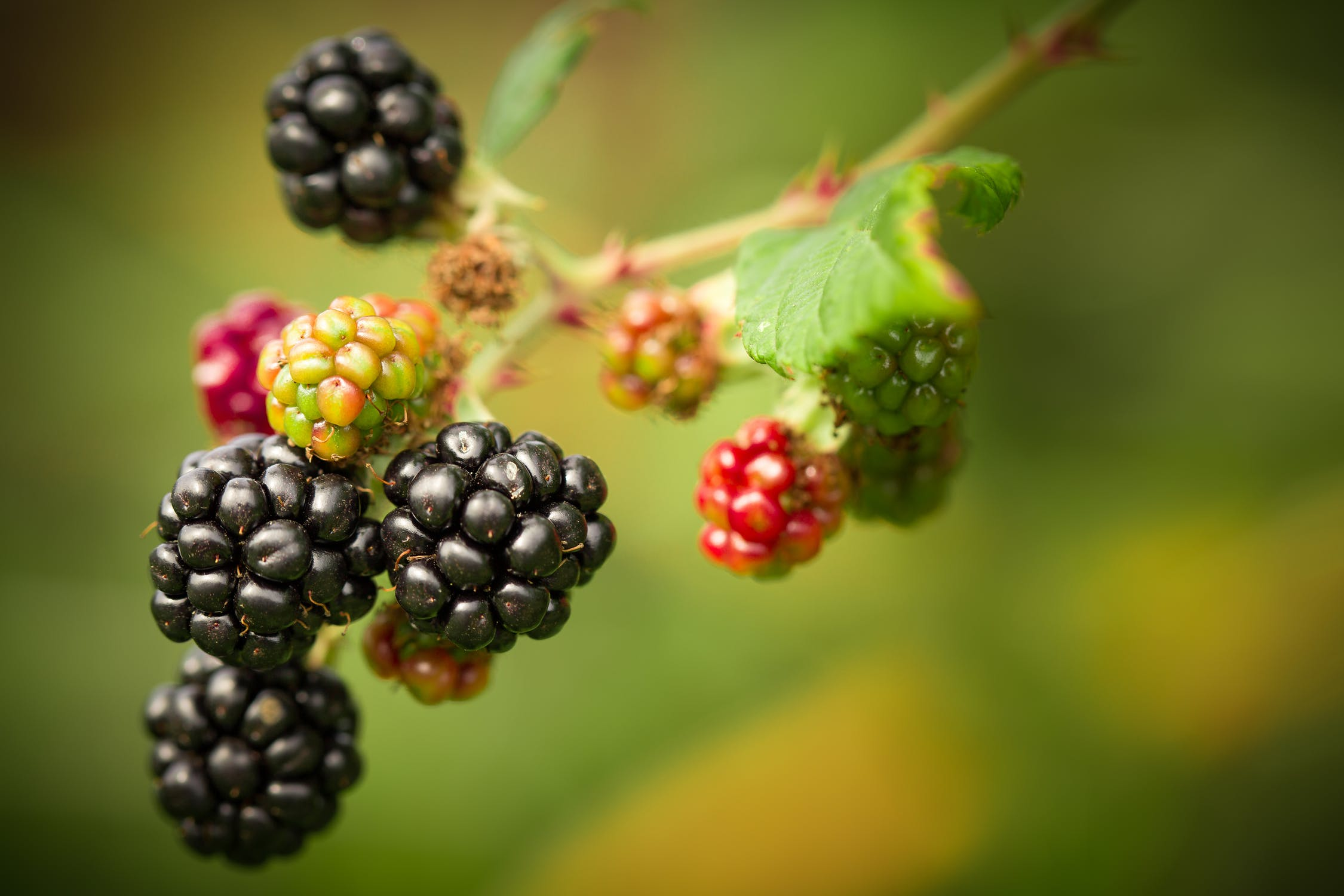 - small fruits