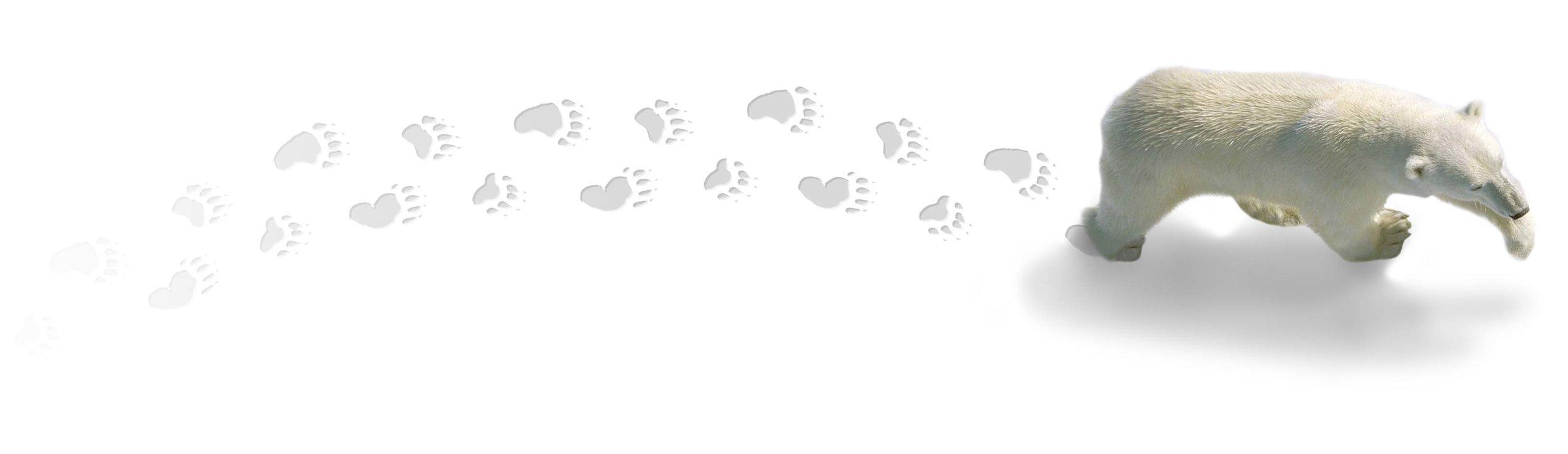 Walking-Polar-Bear2.jpg