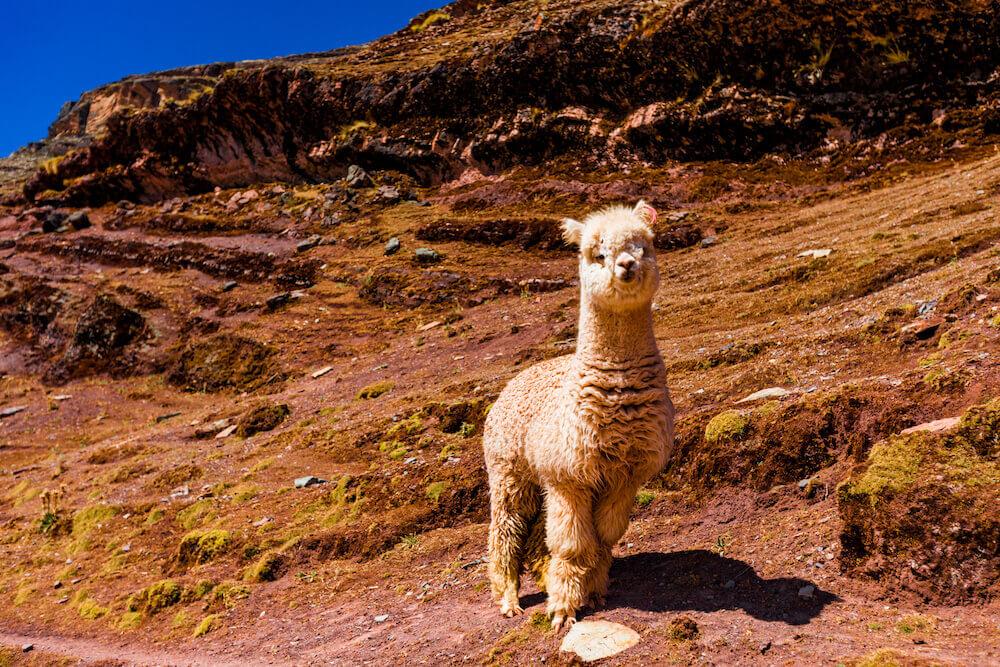 Andean Textiles