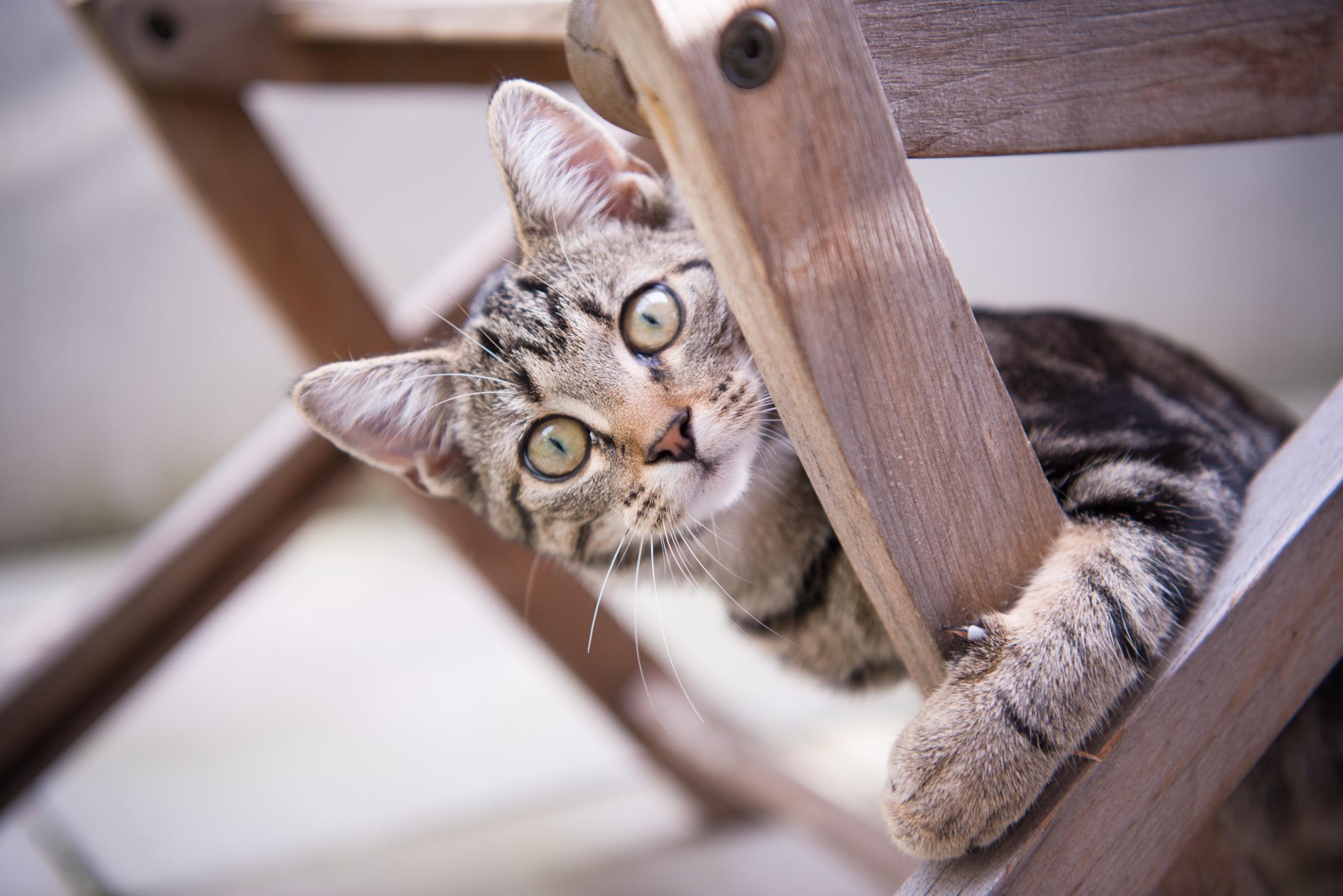 Huisdieren - Een fotoreportage samen met je huisdier? Yes, please! Als grote dierenvriend leer ik graag jou en je viervoeter beter kennen.VANAF €100 VOOR 1U FOTOGRAFIE