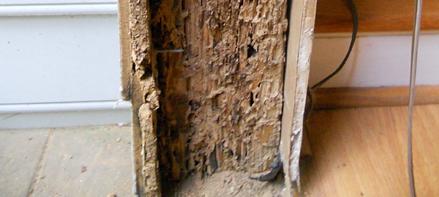 Wood Destroying Insect Inspection -