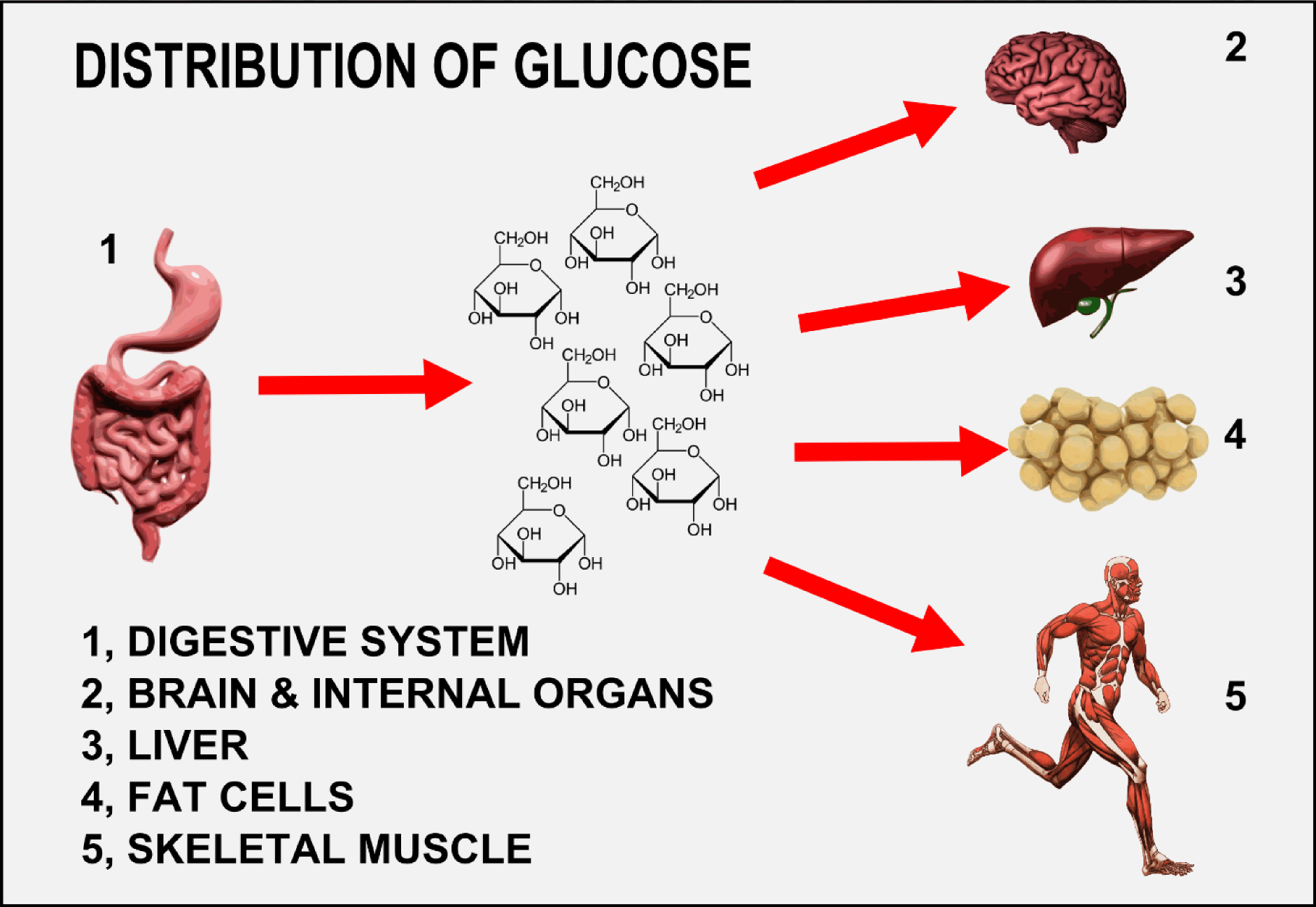 distribution of glucose.png