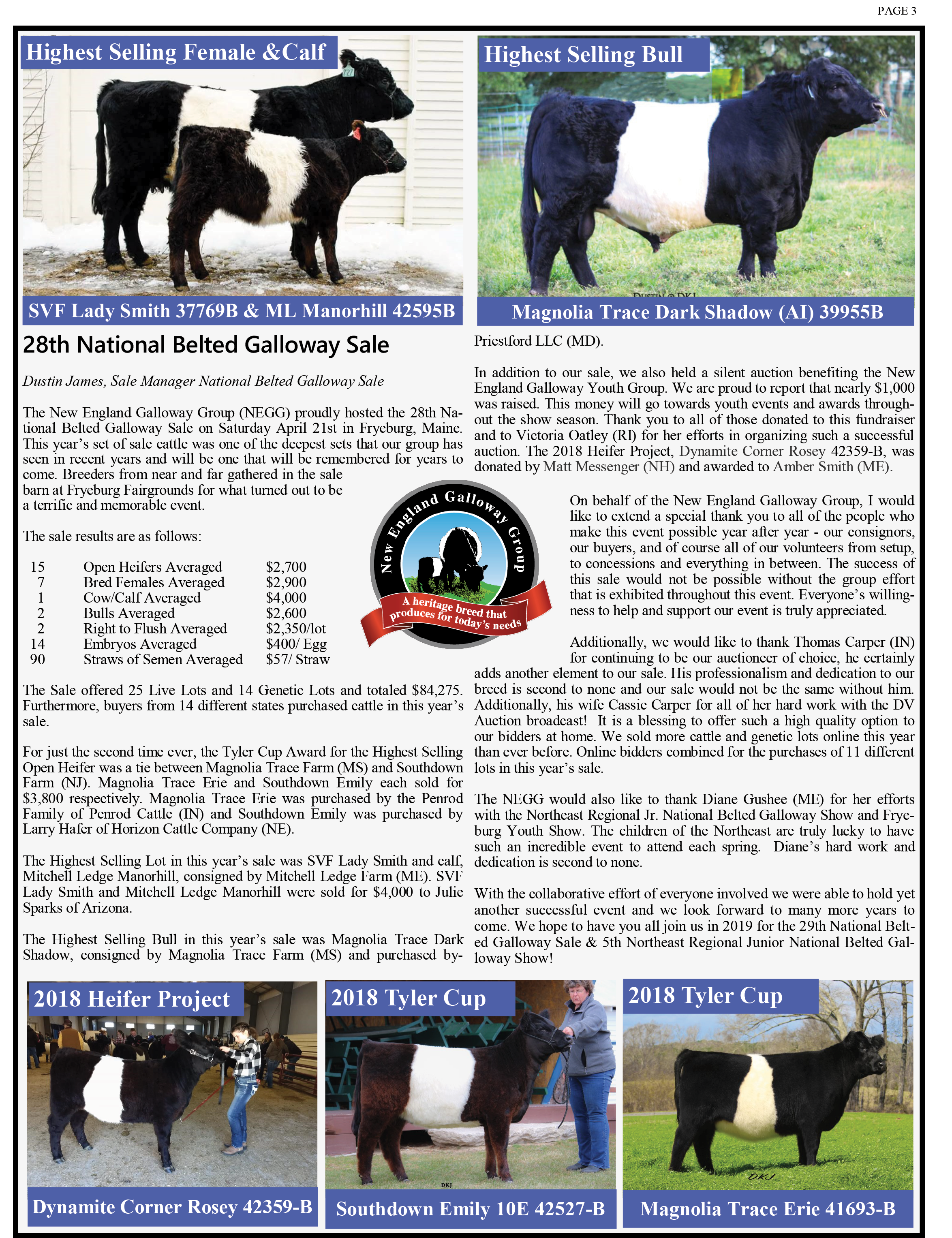 National Belted Galloway Sale DKJ.png