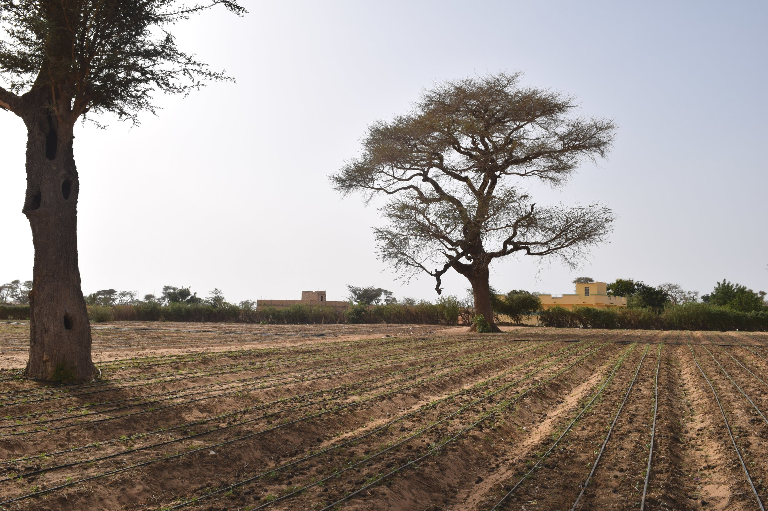 Drip irrigation project in Senegal.