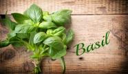 Basil-the-king-of-plants.jpg