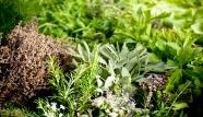 dry-gresh-herbs.jpg